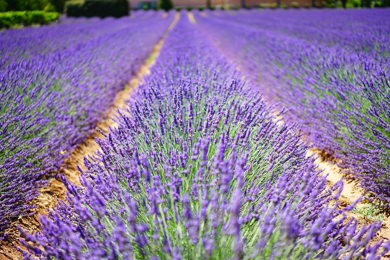 provence_1280
